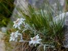 stelle-alpine1
